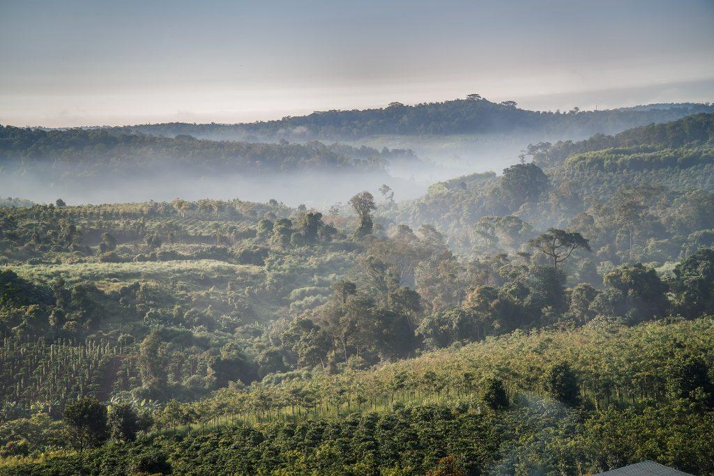 grootste koffieproducenten ter wereld - vietnam